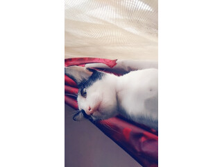 Want caring owner for cat
