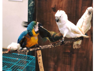 Parrots for sale in india