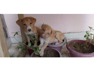 Healthy Male puppy