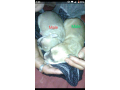 puppies-for-sale-small-3