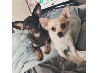 2 dogs for rehoming