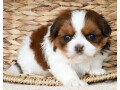 puppies-for-adoption-small-1