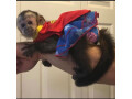 capuchin-monkey-for-sale-small-0