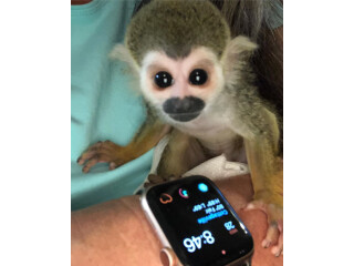 SQUIRREL MONKEYS FOR SALE