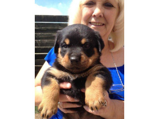 GORGEOUS ROTTWEILER PUPPIES (601) 675-2405