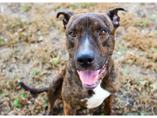 Friendly, four year old male dog for adoption