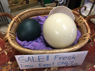 Ostrich and Emu Fertile Eggs for sale