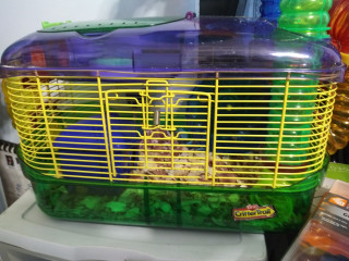 Do dwarf hamsters for sale 50 bucks for everything